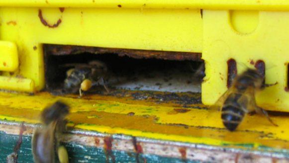 Bijen zijn cool